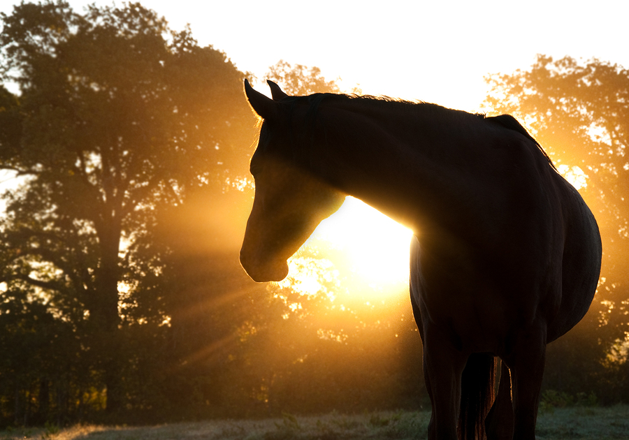 Beautiful horse Lorrie the Pet Psychic types of readings