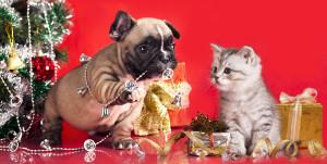 KittenPuppyHolidaySale