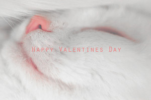 Happy Valentines Day with a beautiful sleeping white cat